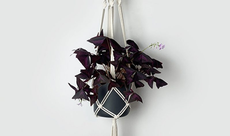 Katie Mitchell: Make a Macramé Plant Hanger